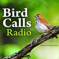 Bird Calls Radio